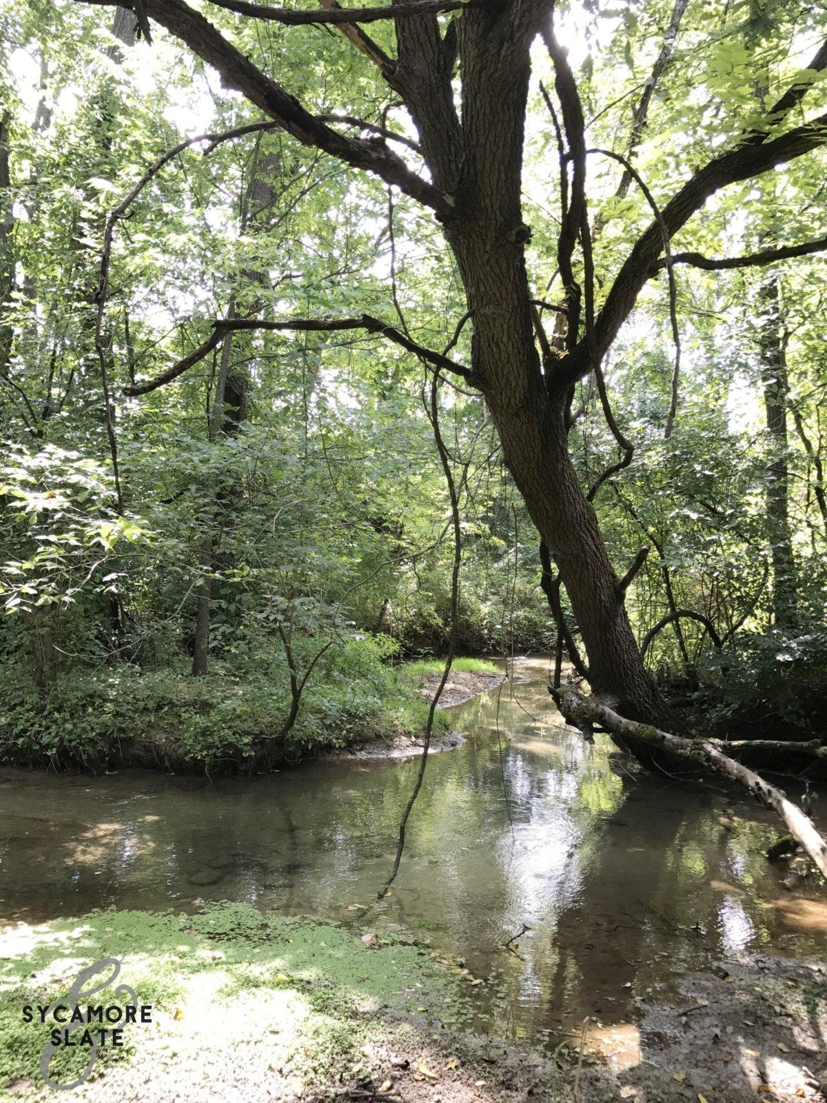 tree over stream