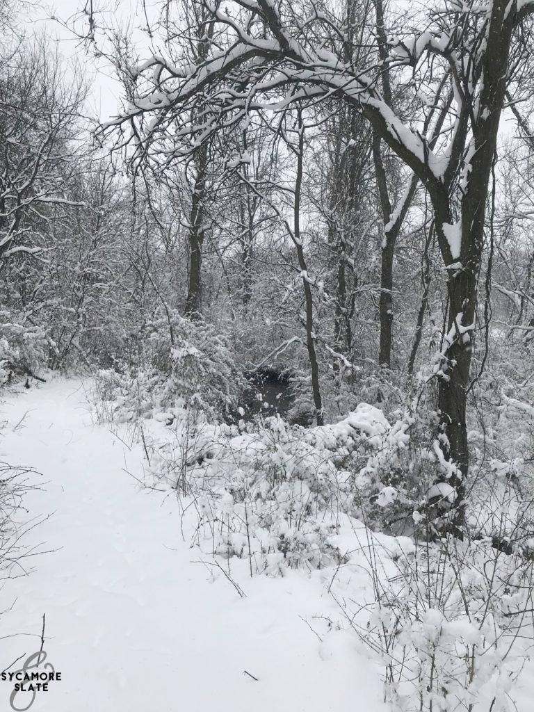 creek and path