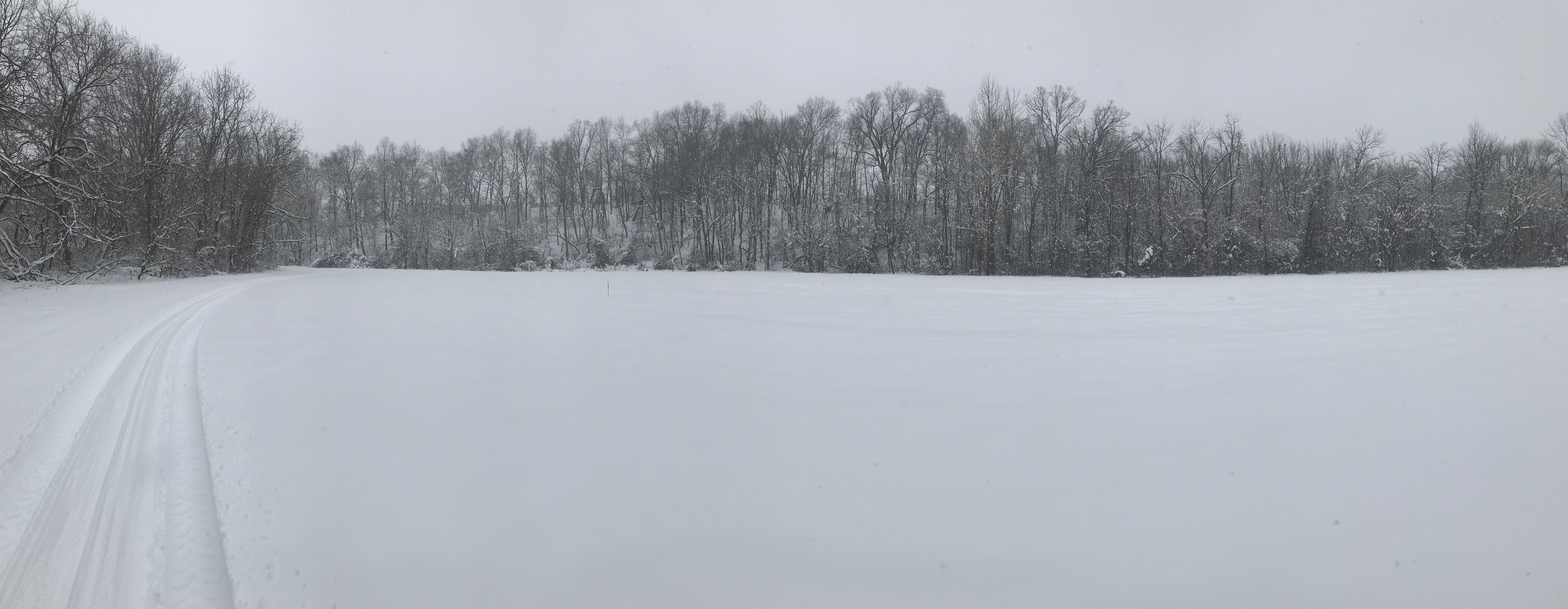 panorama of meadow