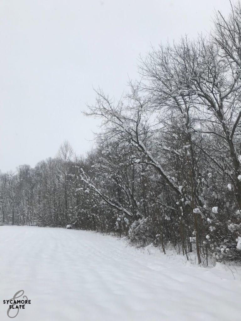 meadow tree line