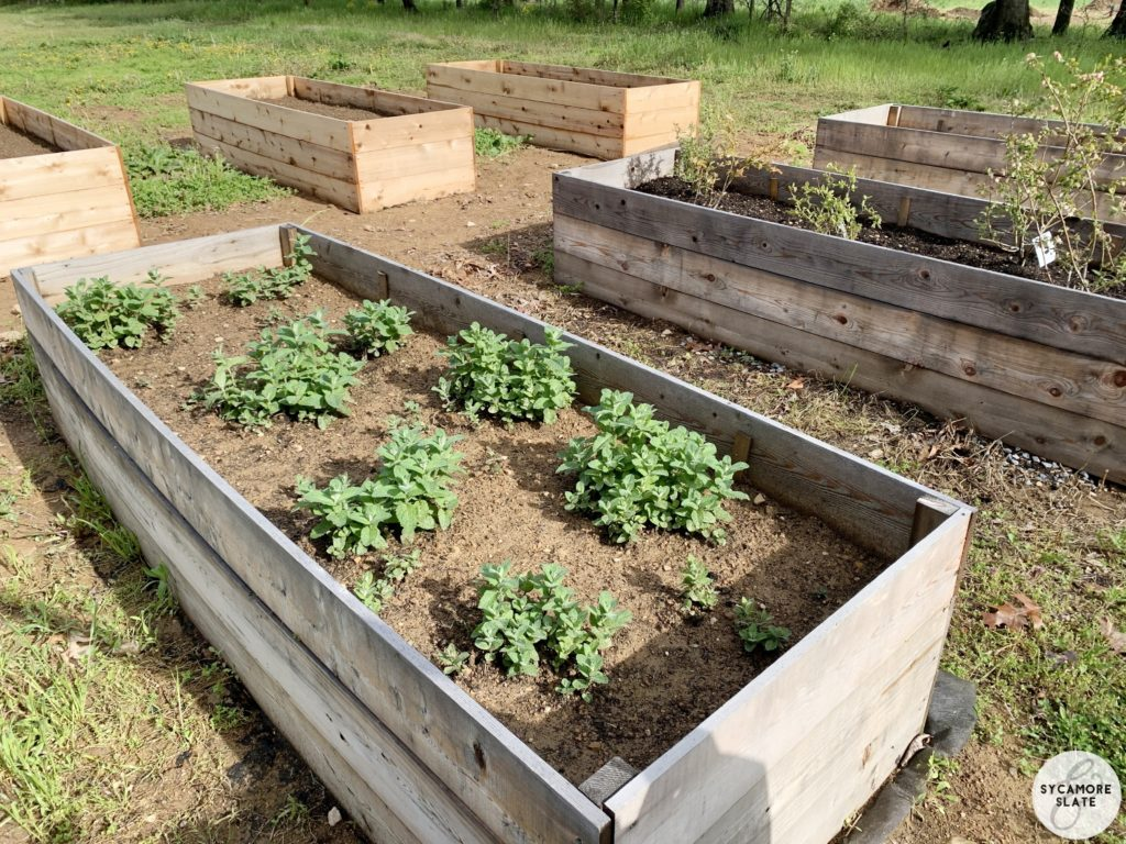 raised beds in garden